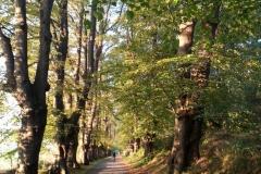 Kurpark Breege/Juliusruh
